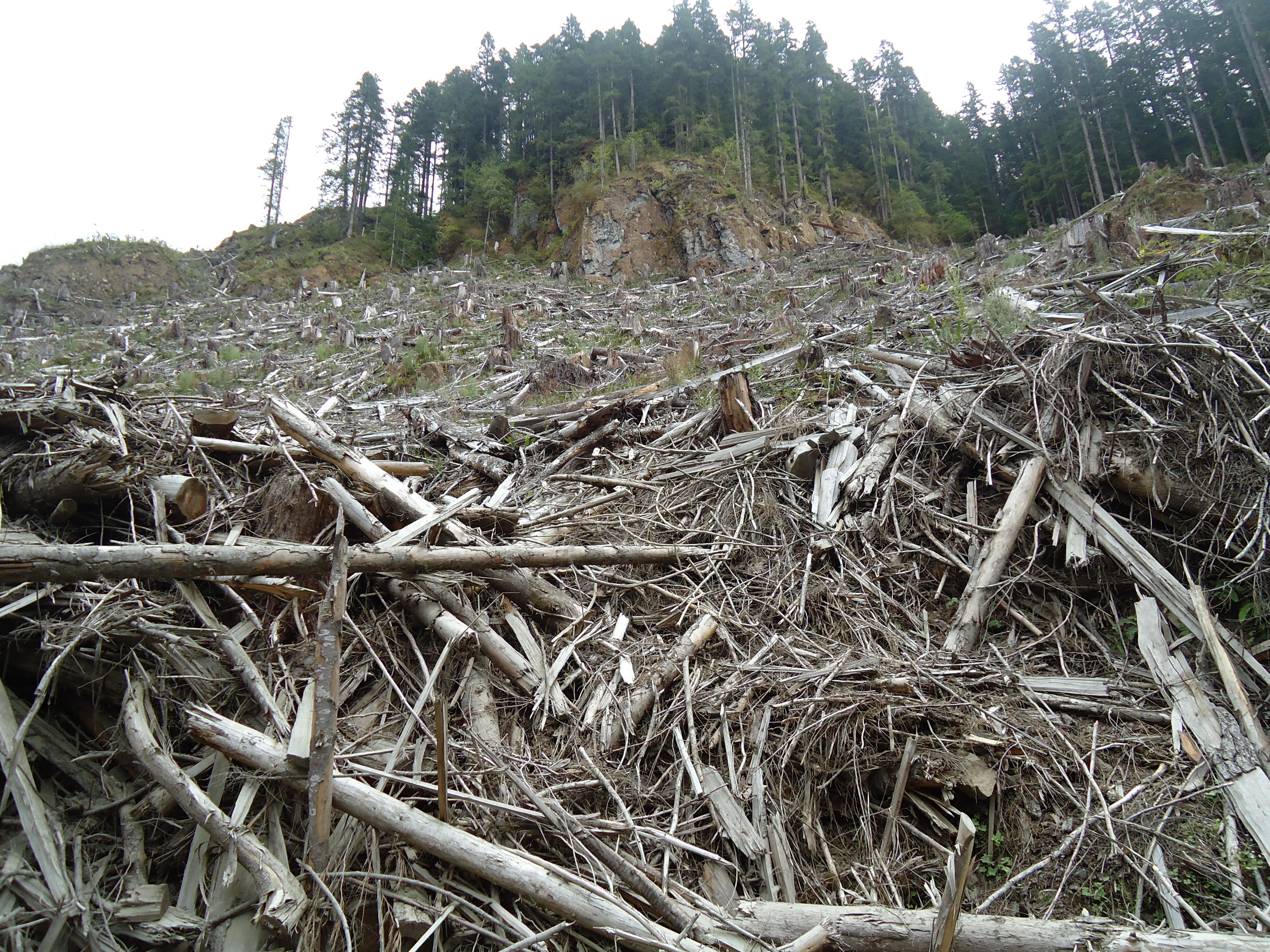 how to reduce clear cutting