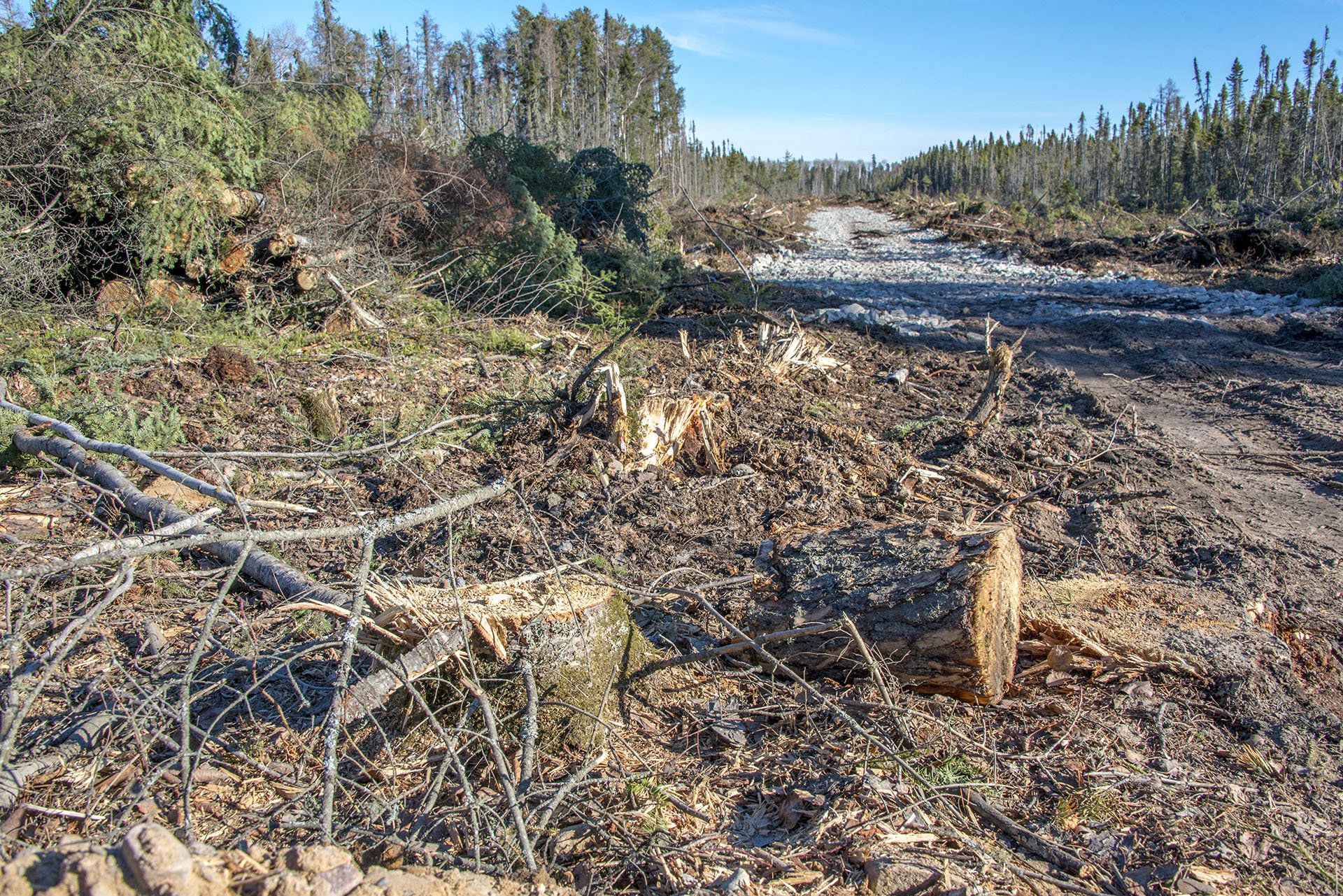 The Manitoba government's assessment process allowed clearcutting before an environment license was even issued