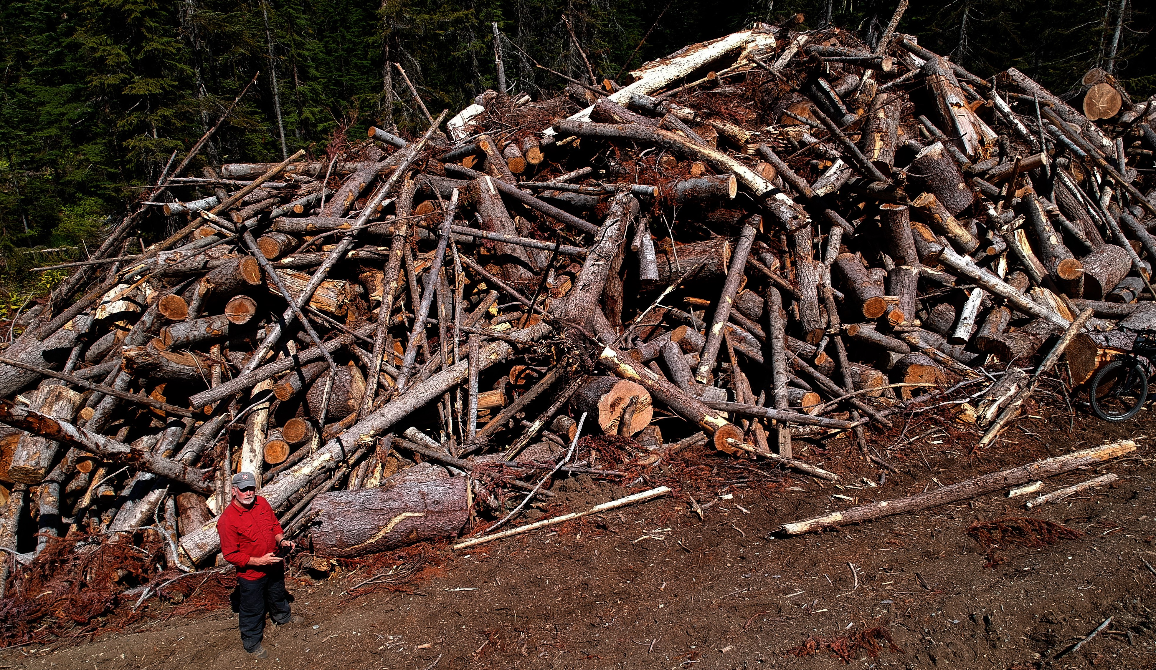Logging waste pile in the Donut Hole - one of many