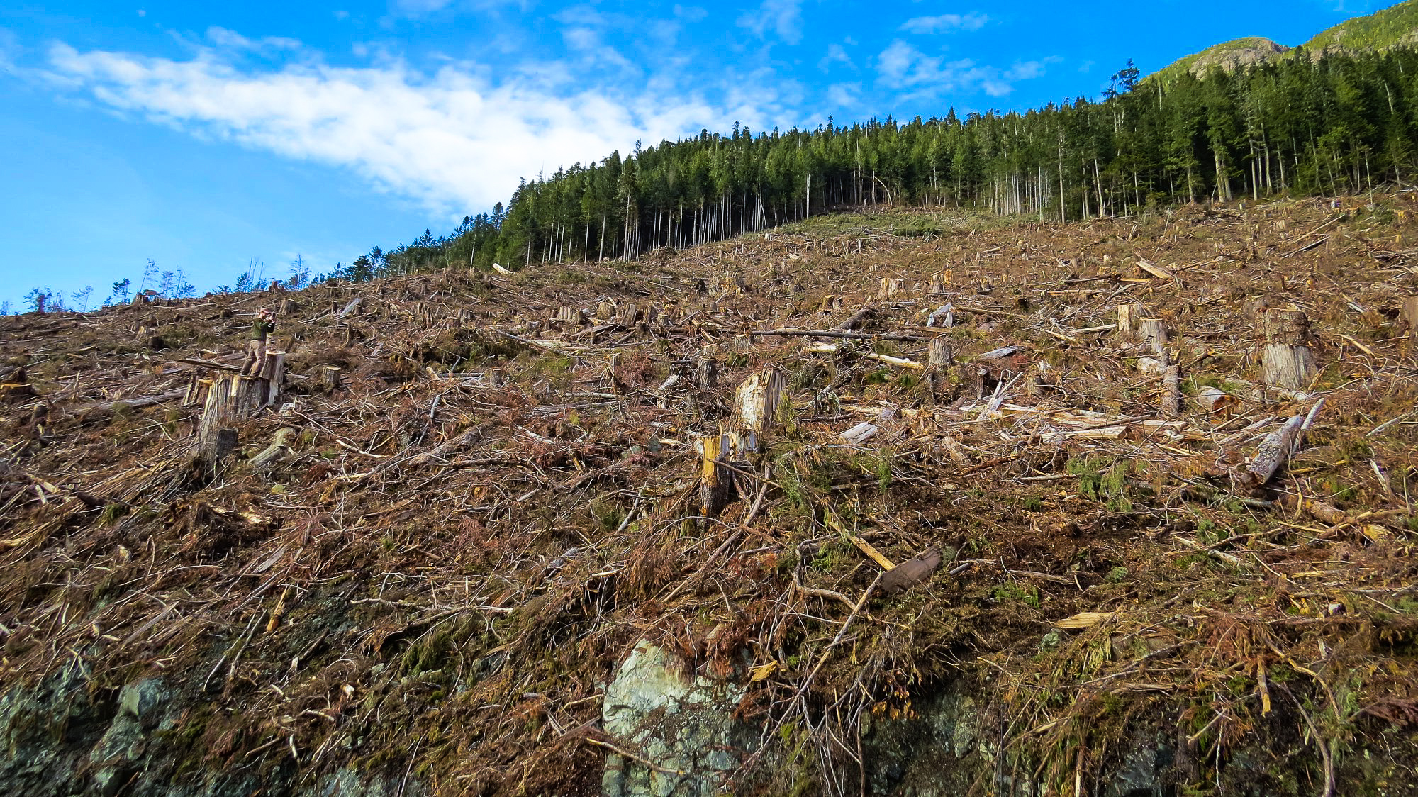 Sierra Club BC campaigner Mark Worthing in a clearcut at Schmidt Creek. Photo: Torrance Coste / Wilderness Committee