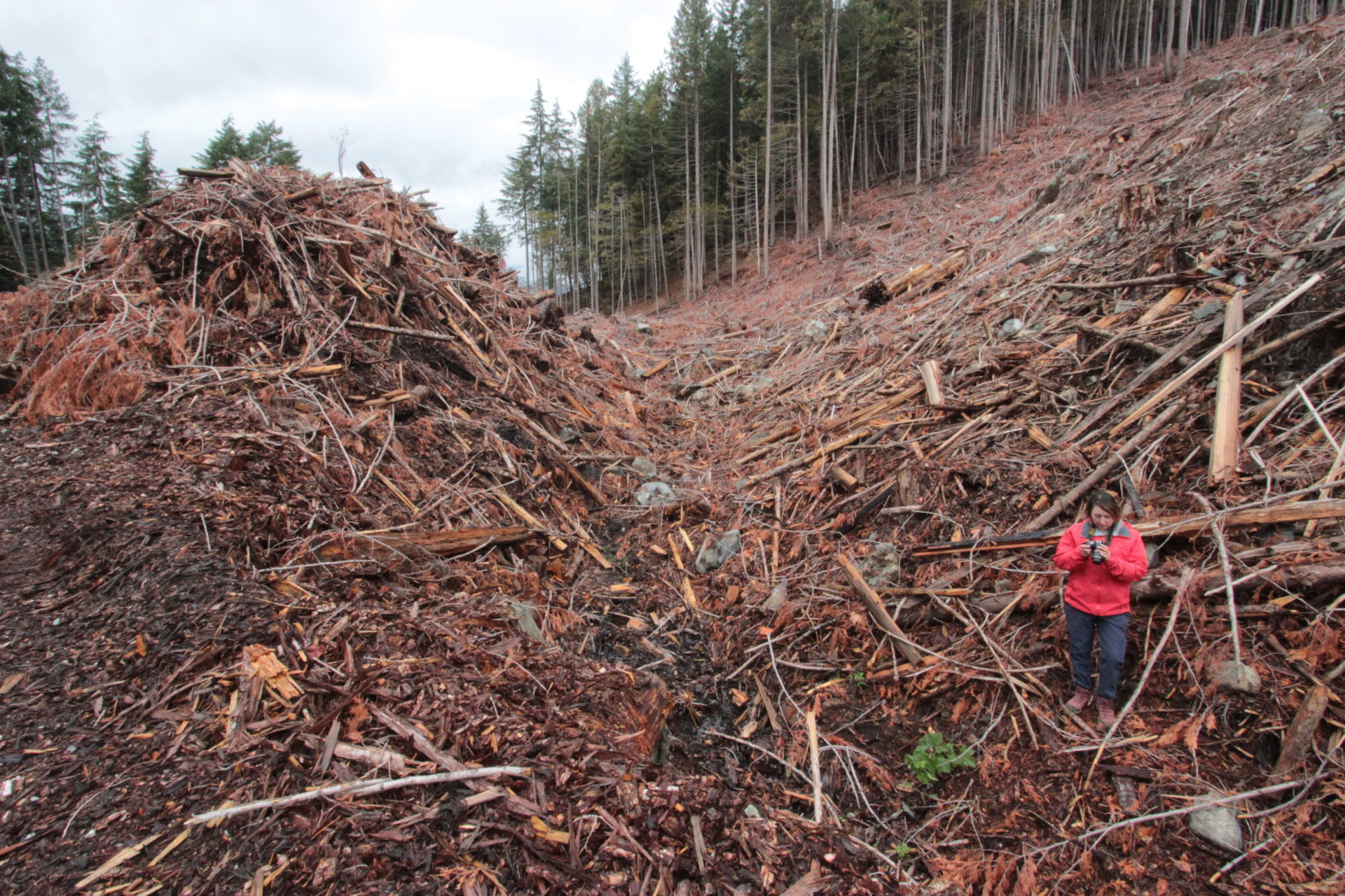 Charlotte Dawe, conservation and policy campaigner with the Wilderness Committee, stands in the Karen Creek clearcut. Photo: Wilderness Committee
