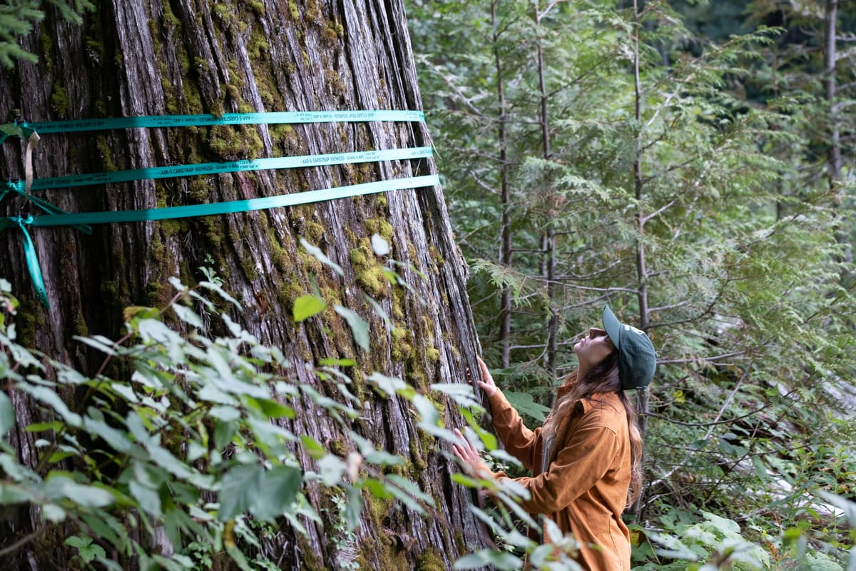 Wilderness Committee conservation and policy campaigner Charlotte Dawe looks at a tree set to be logged in the Argonaut Creek drainage. Photo: Wilderness Committee