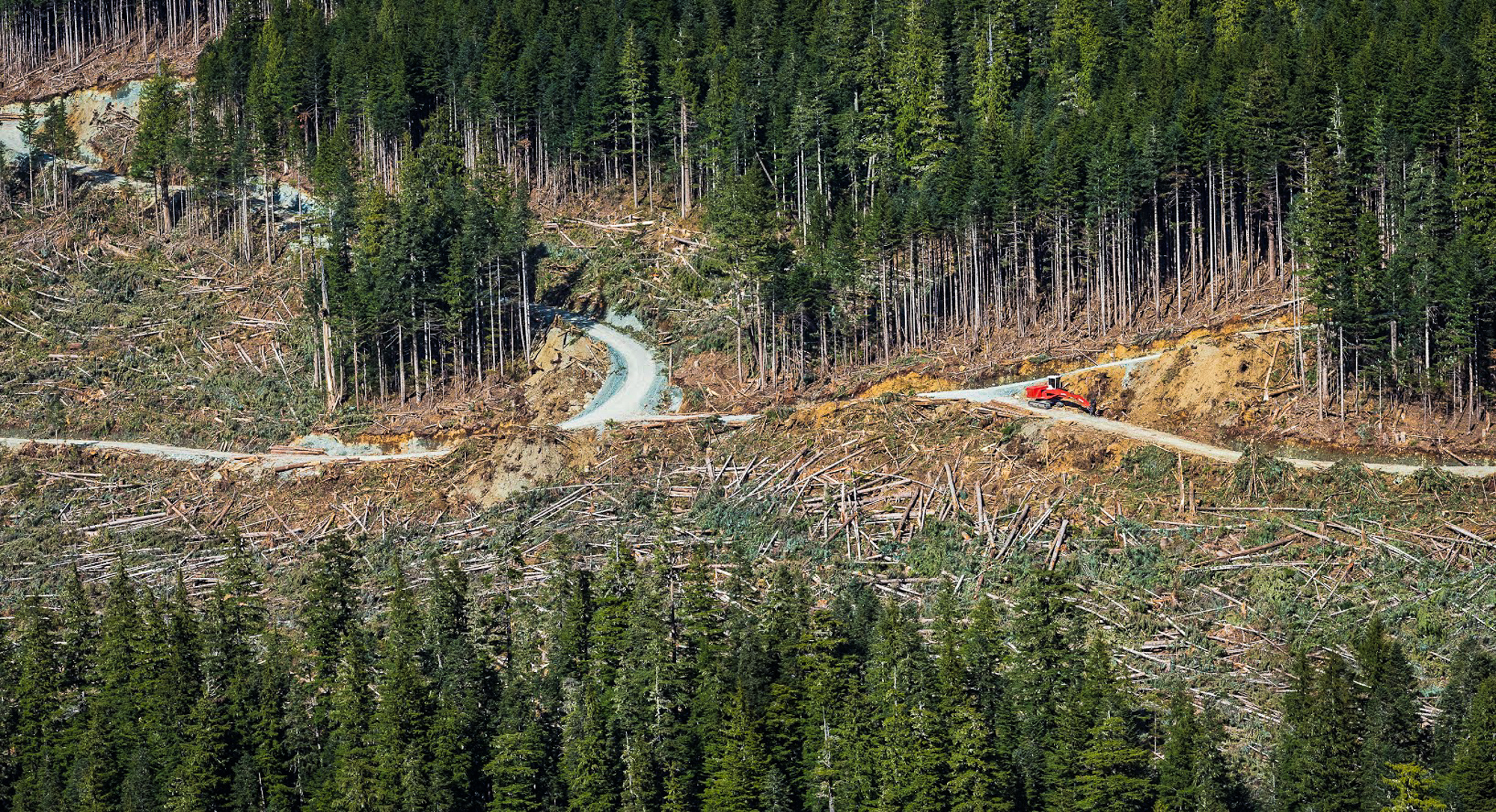 Logging in Schmidt Creek. Louis Bockner / Sierra Club BC and Wilderness Committee