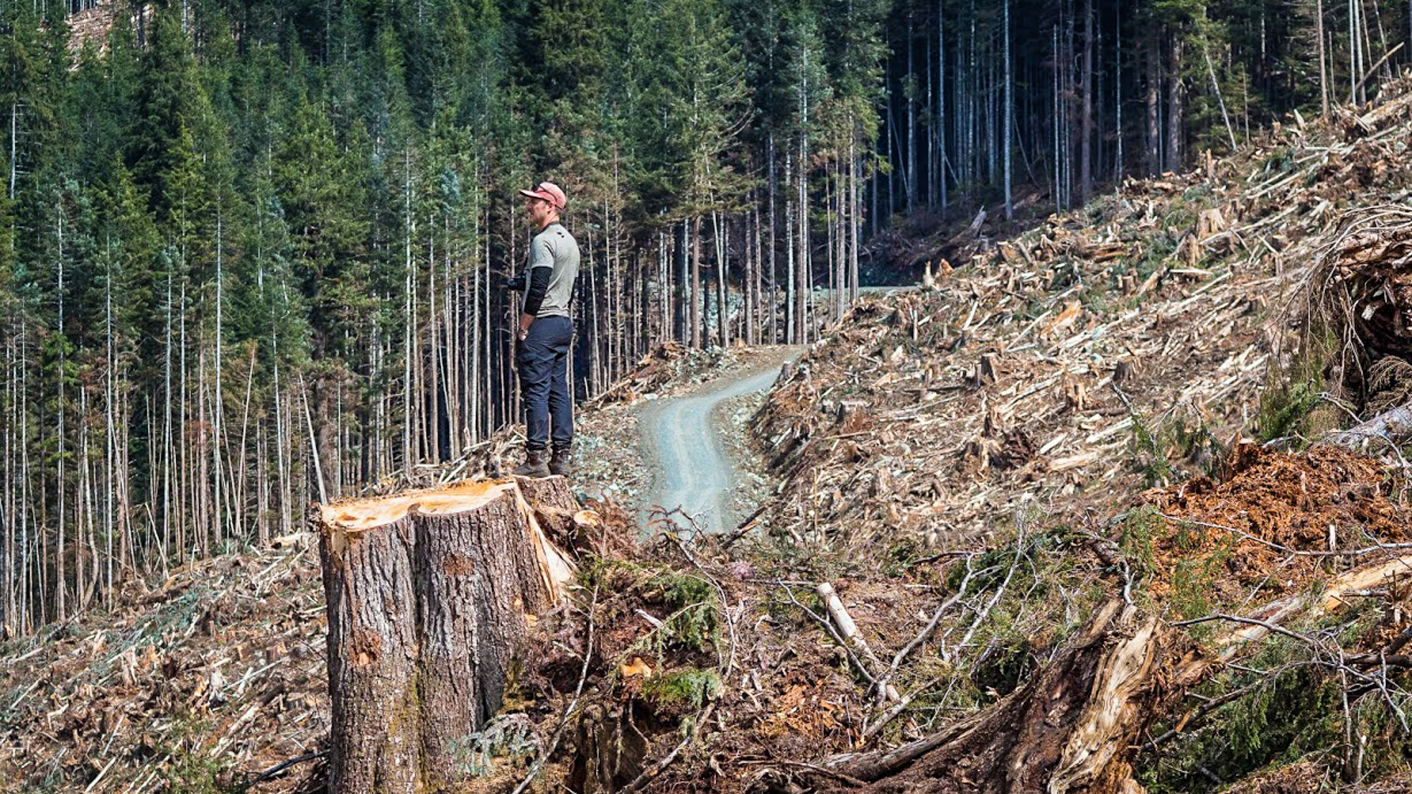 Wilderness Committee campaigner Torrance Coste in a BC Timber Sales old-growth clearcut in Thursday Creek, Upper Tsitika Valley. Photo: Louis Bockner / Sierra Club BC and Wilderness Committee