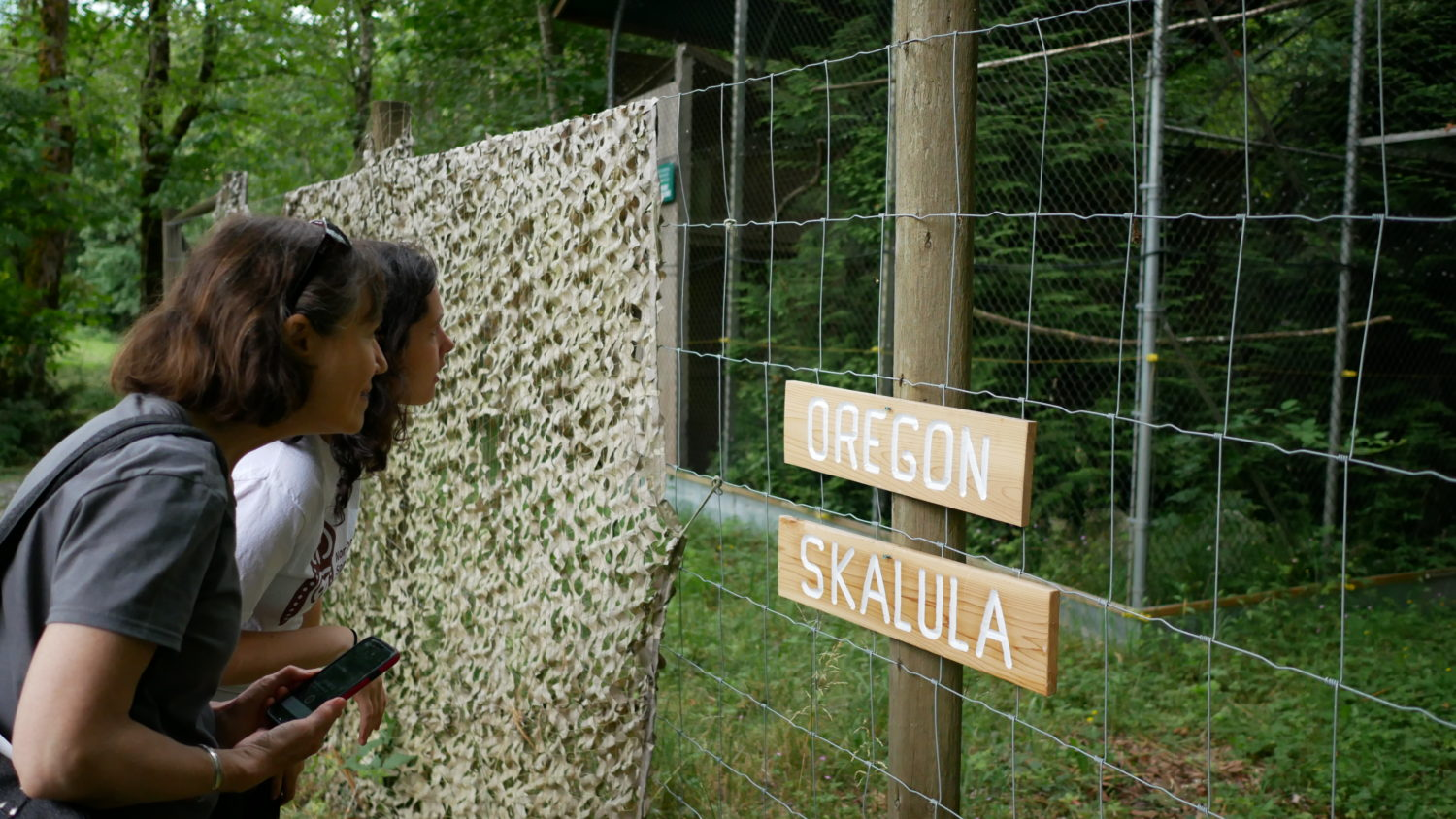 Cox and McCulligh search for spotted owls, Oregon and Skalula, in their quiet aviary. Photo: Carol Linnitt / The Narwhal