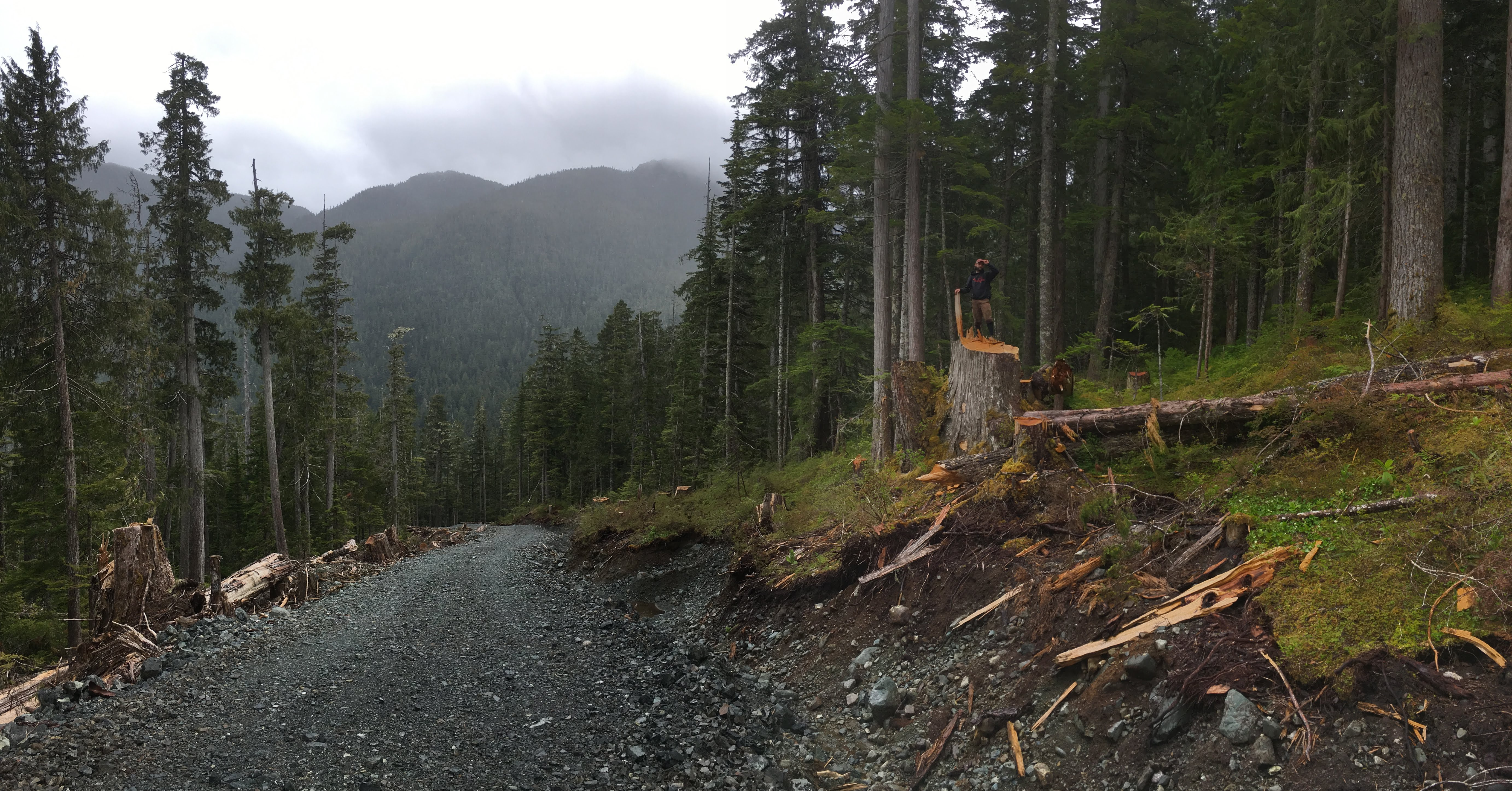 Sierra Club BC Campaigner Mark Worthing on new BCTS logging road in Schmidt Creek