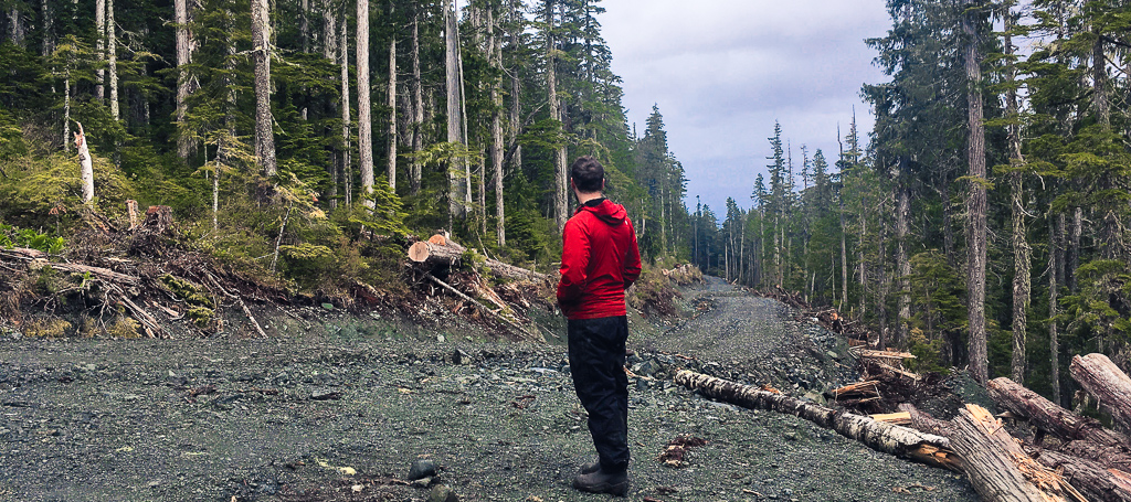 Torrance Coste standing in the middle of a logging road