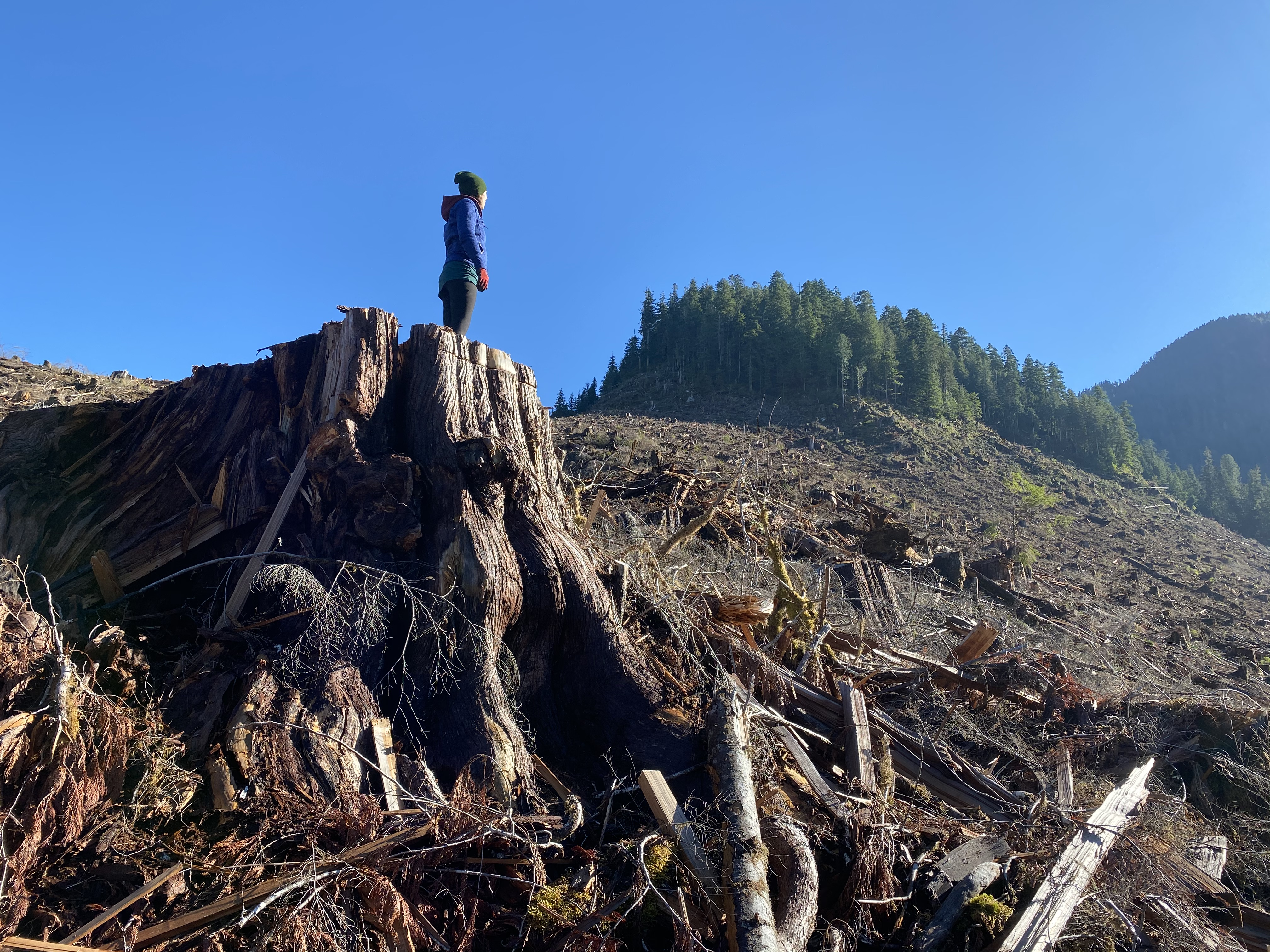 Photo: Emily Hoffpauir in a clearcut, Caycuse Valley (WC files)