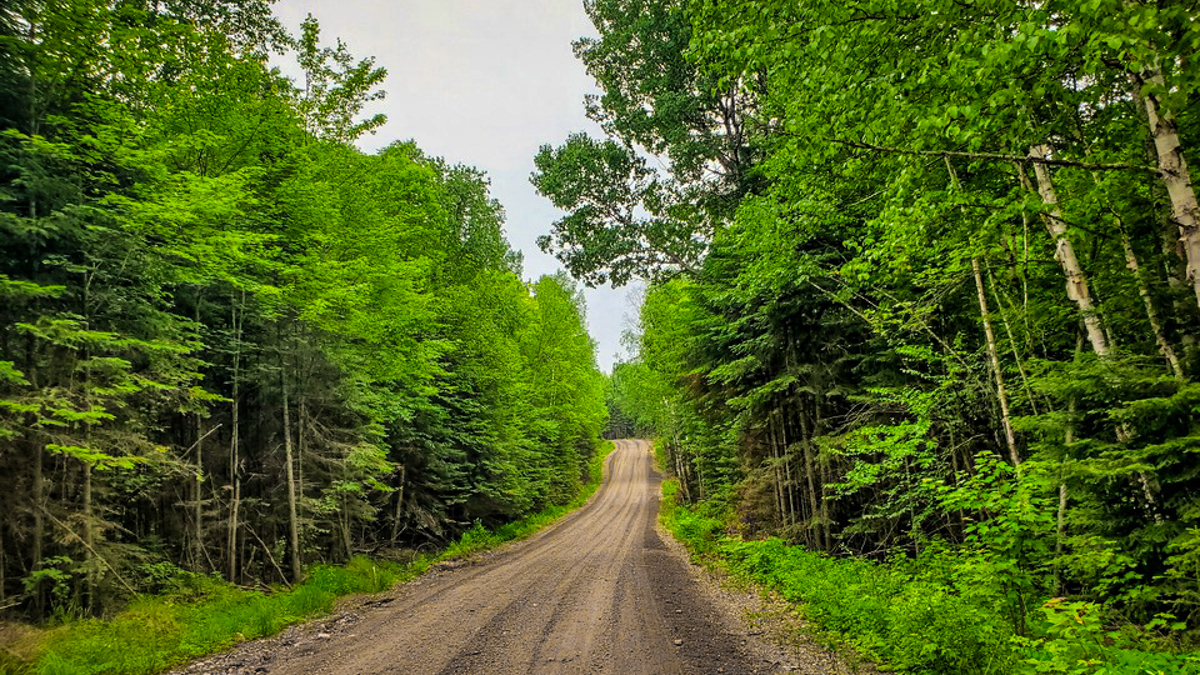 A logging road in Algonquin