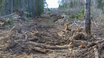 Destroyed forest in Hollow Water First Nation