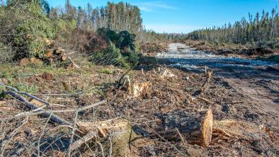 A clearcut road fpr the frack sand mine, Hollow Water First Nation, Manitoba
