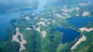 Aerial view of British Columbia forestry clear cuts. Photo by Sam Beebe / CC BY 2.0, cropped from original