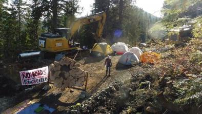 Stopping road building and logging in old-growth forest at Fairy Creek Ridge Blockade Camp, August 2020. Photo: Rainforest Flying Squad