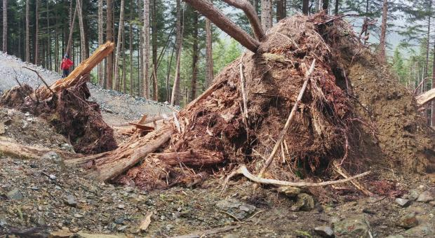 Erosion and fallen trees after BCTS road building in Schmidt's Creek