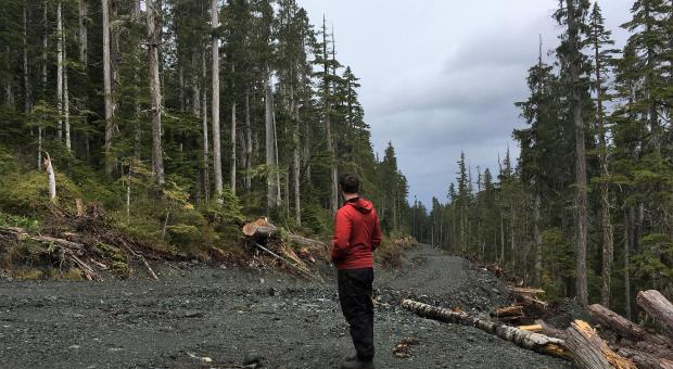 Time To Act On The Old Growth Crisis
